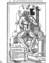 From De dissectione partium corporis humani libri tres; Image of seated man holding open his dissected throat, showing internal anatomy.